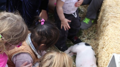 Davis Farmers Market celebrates pigs