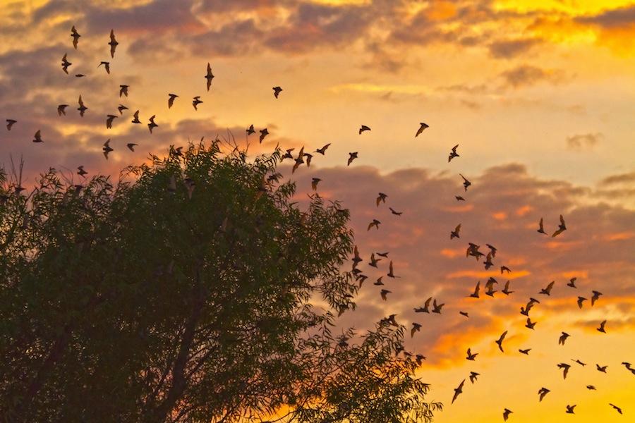 Bat Walk and Talk all summer long