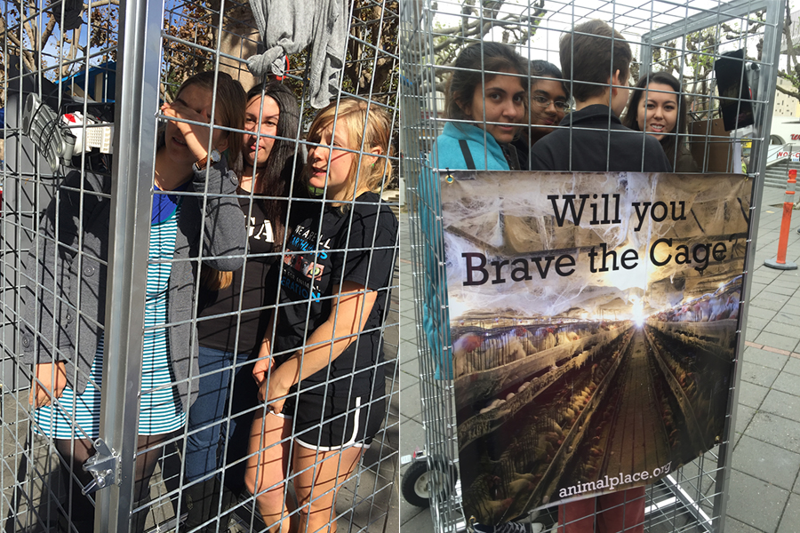 Farm sanctuary Animal Place hosts Brave the Cage campaign