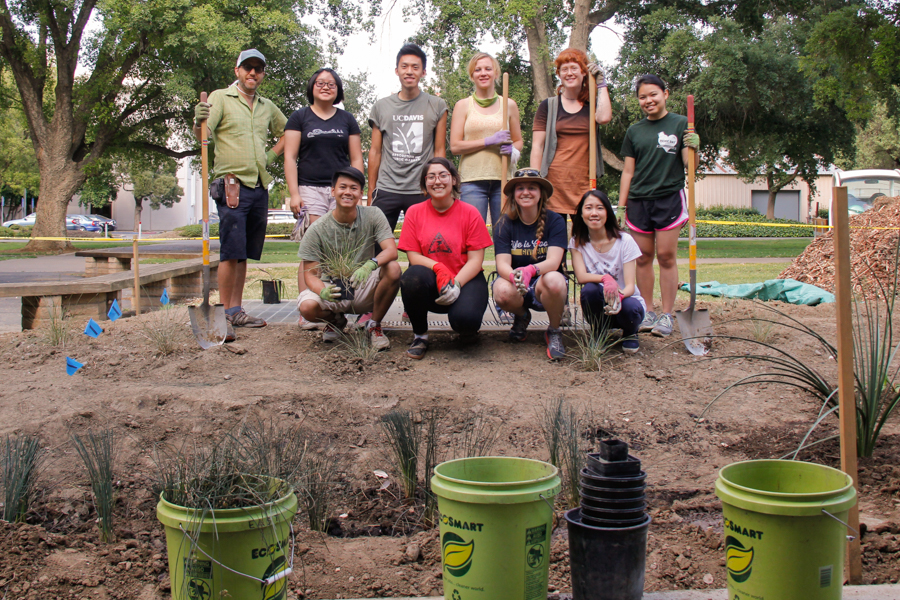 UC Davis students convert unused lawns into sustainable gardens