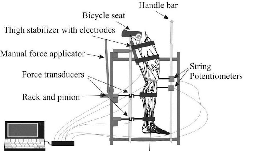 Maximizing the capability of the human body