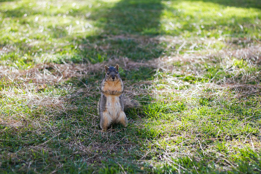 HUMOR: Cute squirrel on campus helps students forget for a moment that we are all dying