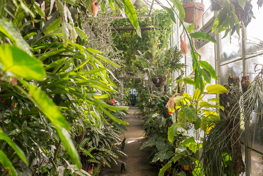 The UC Davis Botanical Conservatory