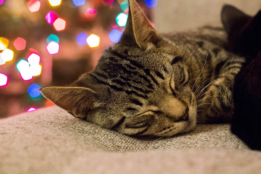 Like my new kitten Finn, I also spent a majority of winter break relaxing in front of the Christmas tree at home and I wouldn't have had it any other way. (KELSEY GREGGE)
