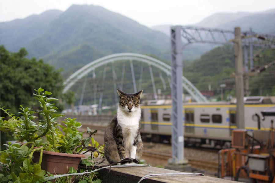 A resident of Houtong Cat Village relaxes during a mild winter day. (DIANA LI)