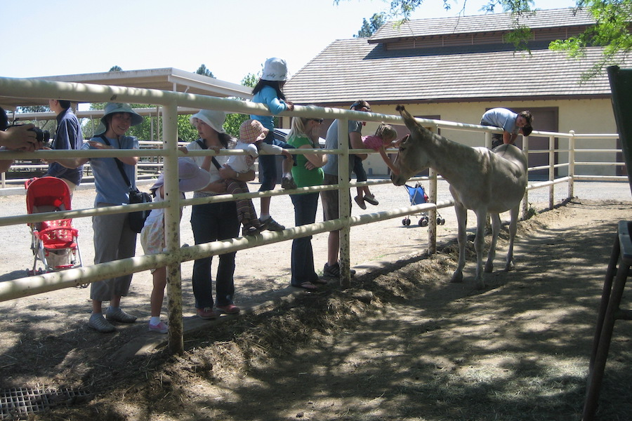 Action Jackson — famous breeding donkey — dies at 29