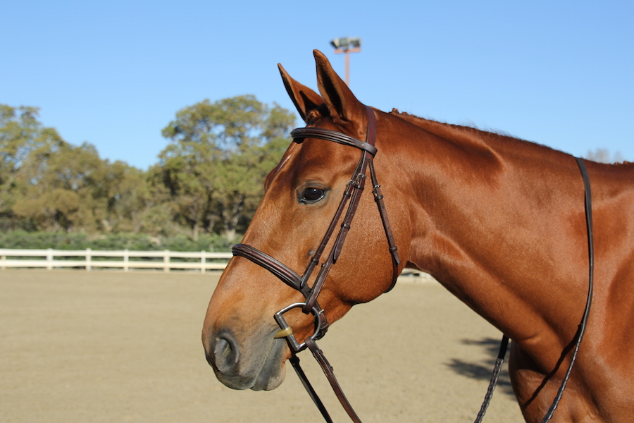 The story of Derrick the Jumping Horse: more than meets the eye