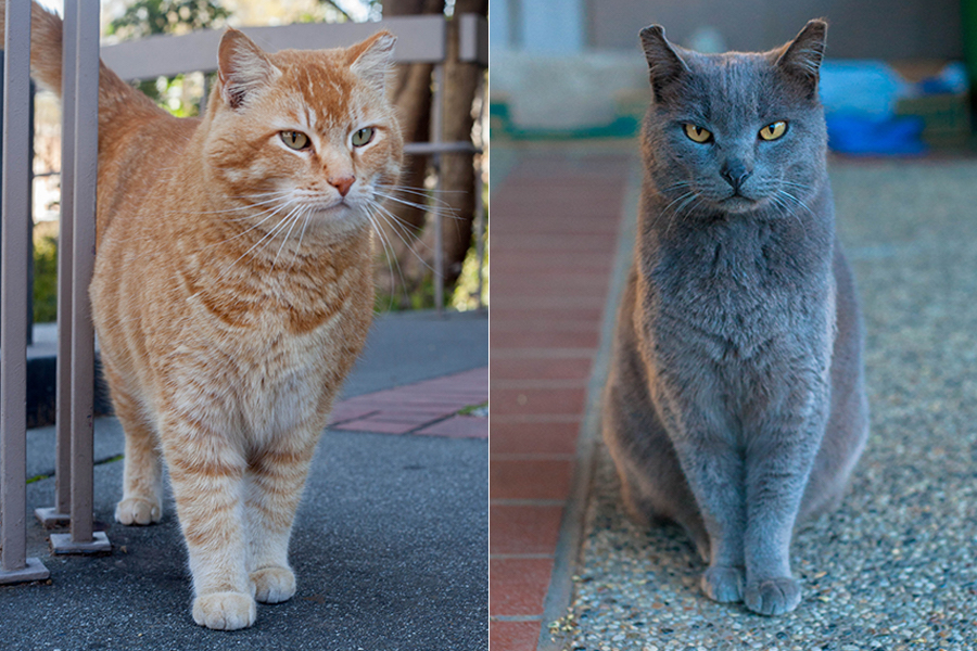 Purr-fect campus pets: The Physics Cats