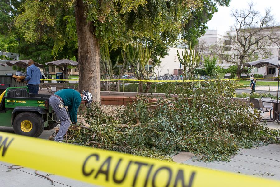 Fallen branch injures four UC Davis employees