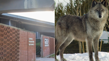 Humor: Big Bad Wolf saddened by news that newly-renovated Freeborn cannot be huffed, puffed and blown down