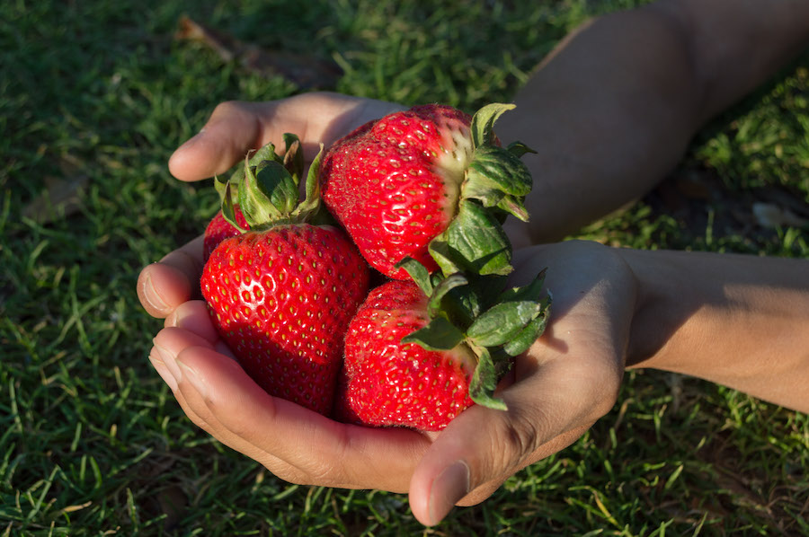 UC Davis, former researchers face lawsuit over strawberry intellectual property
