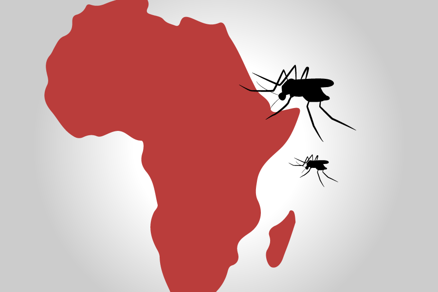 New strains of mosquitoes to fight malaria in Africa
