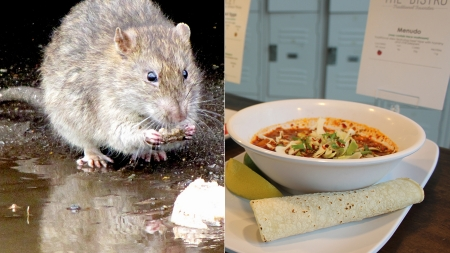 Humor: Escaped lab rats found in DC food, students find it tastes better