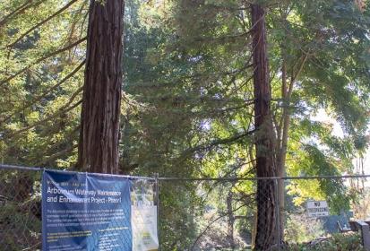 Keeping the Arboretum healthy