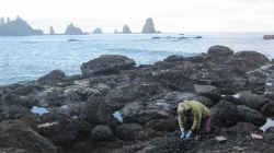 Mussels, seaweed beds control temperature in intertidal areas