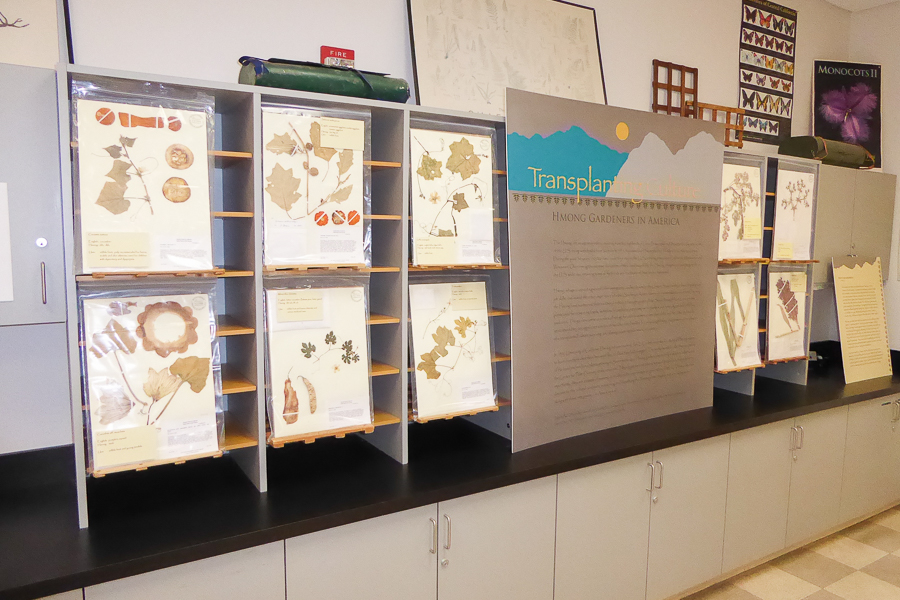 Herbarium exhibits plant species significant to Hmong people