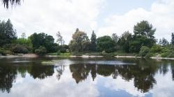 Floating islands in Arboretum for cleaner waters
