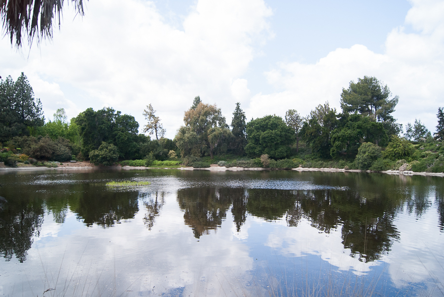 Floating islands in Arboretum for cleaner waters