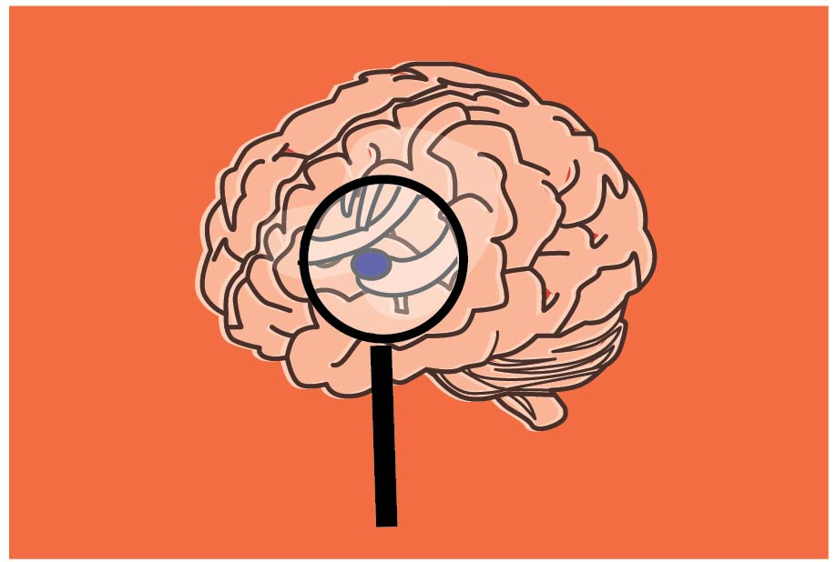 Human amygdala growth different in cases of autism