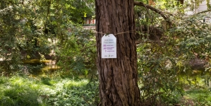 Tree tags in Arboretum soon to appear on trees downtown