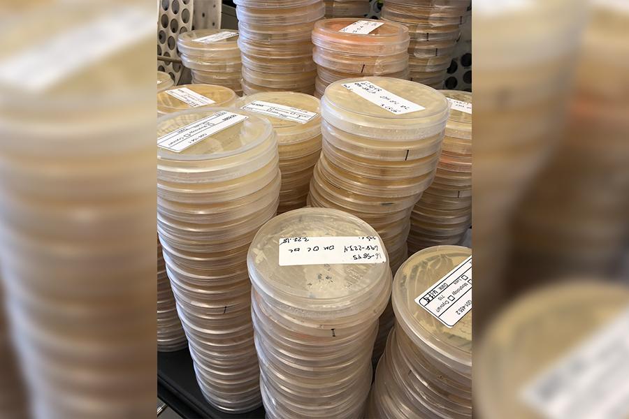 Yeast Originated in China
