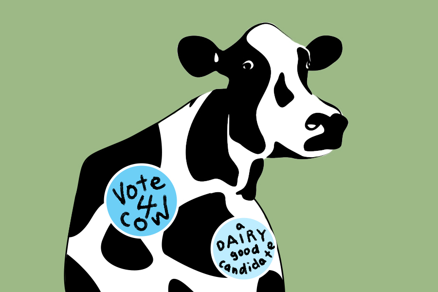 Humor: One bold cow to run for ASUCD president