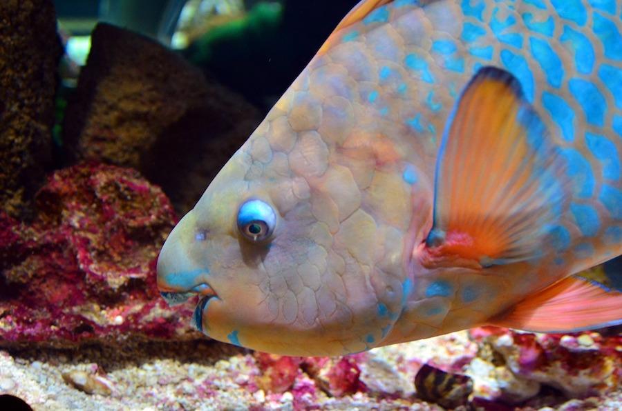 Fish keep friends close, anemones closer