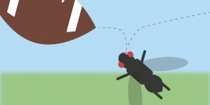 Flies, Traumatic Brain Injury and the Tau Protein