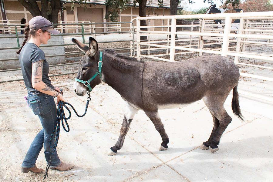 How to train your donkey
