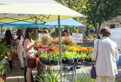Plant Sales raise money for Arboretum, Public Garden