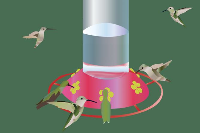 Hummingbirds of a feather feed together