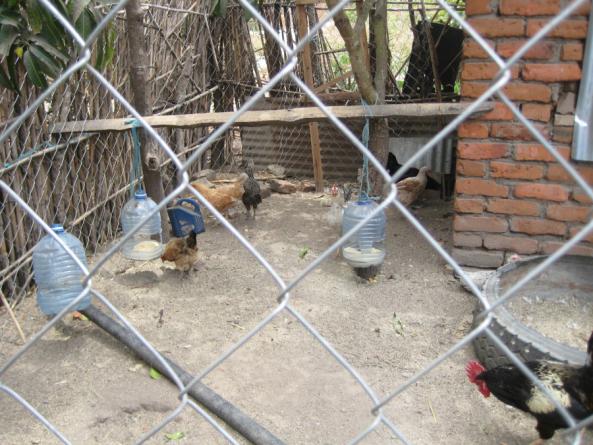 Nutrition education for farming families