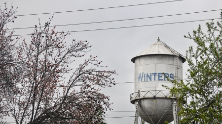 Say Goodbye to Winter Quarter and Hello to Winters, Calif.