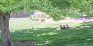 Best Nap Spot: Arboretum