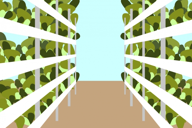 Is vertical farming a solution for feeding our growing cities?