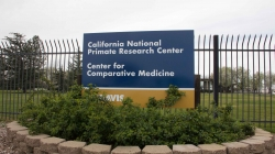 7 infant primates die at UC Davis' primate research center