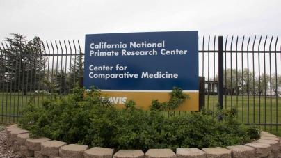 7 infant primates die at UC Davis' primate research center