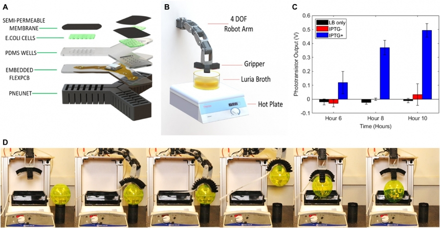Biosensing soft robot uses E. coli to detect surroundings