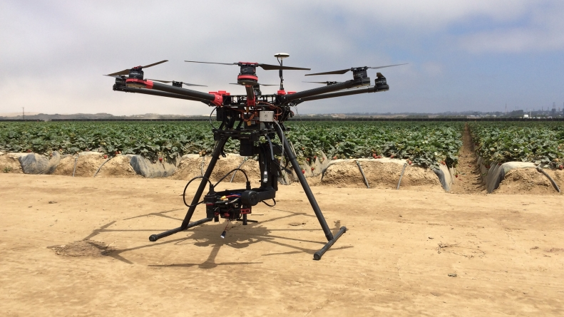 Using drones and predatory bugs, UC Davis researchers treat crop pests