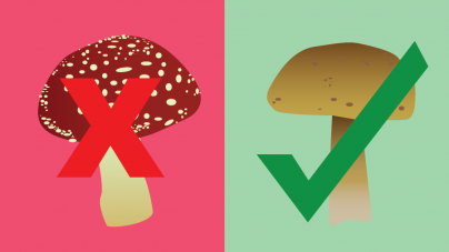 Researchers develop field test for toxic mushrooms