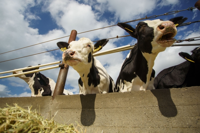 Large reduction in emissions from the California dairy industry over past 50 years