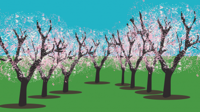 Almond orchard recycling a sustainable and beneficial strategy for growing almonds