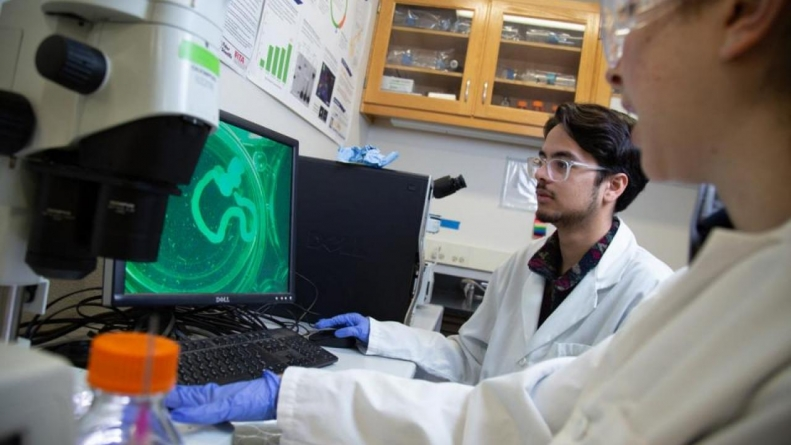 AvenueB guides transfer students within biological sciences toward success