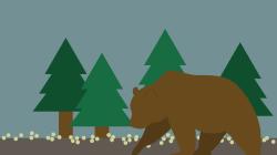 West Davis Pond's island-dwelling bear, nick-named Gilligan, met an untimely death