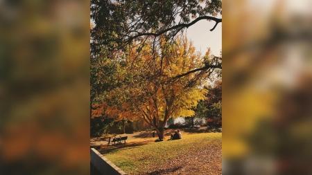 Best Picnic Spot and Best Romantic Location: Arboretum