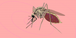 New study highlights success of gene drive technology with preventing mosquito-spread diseases