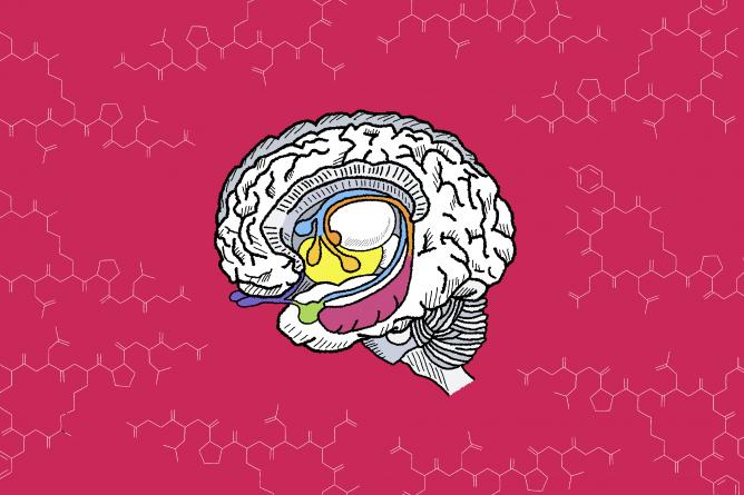 Oxytocin decreases social anxiety in mice, according to UC Davis study