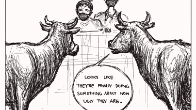Cows' perspective on face masks