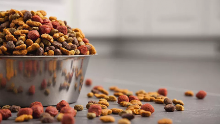 Oh no! What to do when you've been caught buying dog food