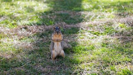 I found a dead squirrel